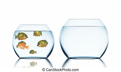 Goldfish Escapes from Piranhas, Beautiful Funny 3d Animation on a White Background with a Blurred Reflection, 4K