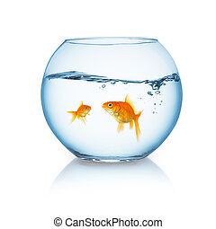 goldfish family in a fishbowl