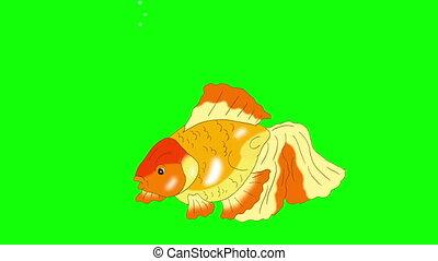 Goldfish Floating in Aquarium Chroma Key - Goldfish Floating...
