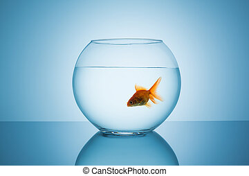 goldfish floats in a fishbowl