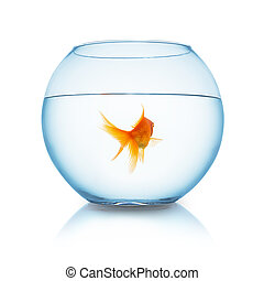 goldfish from behind in a fishbowl