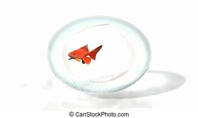 Goldfish in a bubble