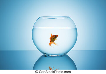 goldfish in a fishbowl glass