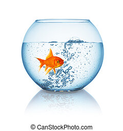 goldfish in a fishbowl with hot water