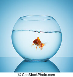goldfish in a fishbowl with water
