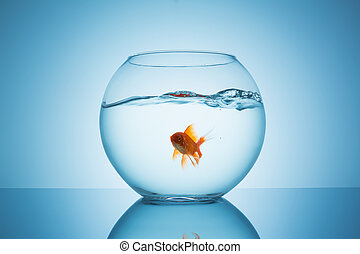 goldfish in a fishbowl with wavy water