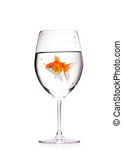 Goldfish in a glass of wine with water isolated on a white background.