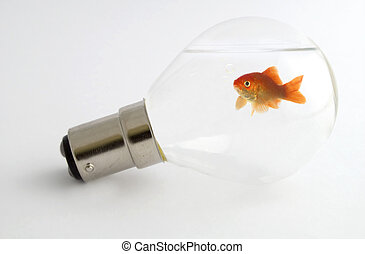 Goldfish in a lightbulb
