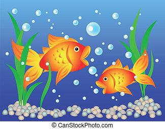Goldfish in aquarium - Fun and colorful: goldfish in an...