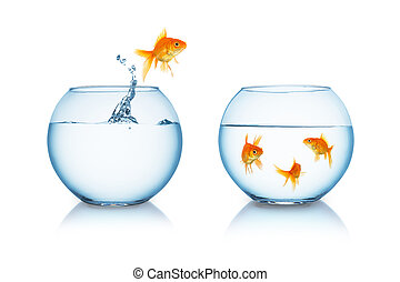 goldfish in fishbowl jumps to friends - A gold fish jumps...