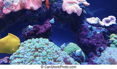 Goldfish in freshwater aquarium