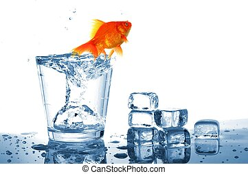 goldfish in glass water