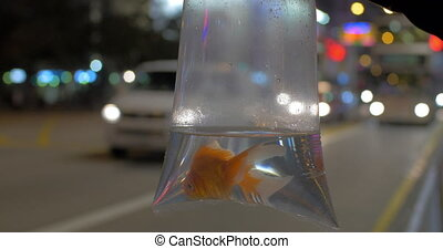 Goldfish in plastic bag against road traffic background -...