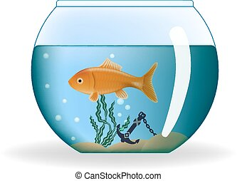 Goldfish in round aquarium