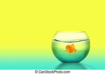 Goldfish in the fishbowl