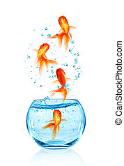 Goldfish jumping. - Goldfish jumping out of the aquarium...