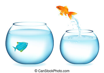 Goldfish Jumping To Other Fish - Golden Fish Jumping To ...