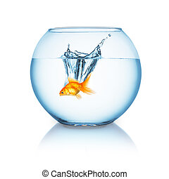 goldfish jumps in a fishbowl