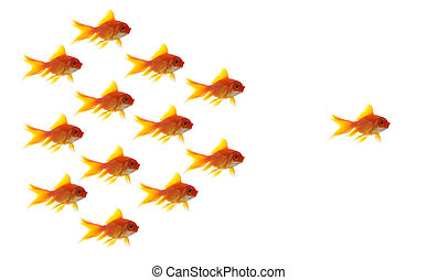 goldfish leader on white background, unique and diffrent ...