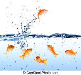 goldfish looking for way out
