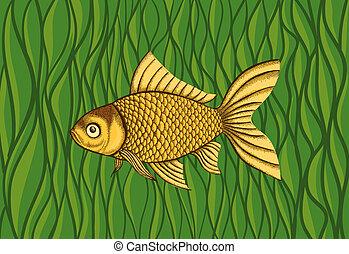 Goldfish on a background of green algae