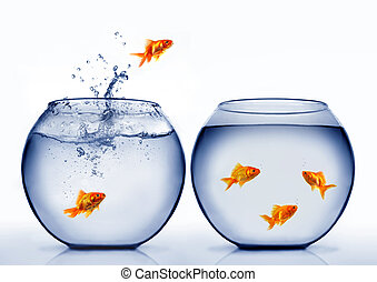 goldfish, saltar, afuera, de, el, agua