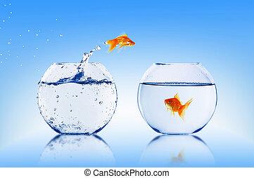 goldfish, salto