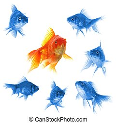 goldfish showing leader individuality success or motivation...