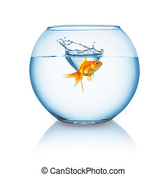 goldfish splashes in a fishbowl