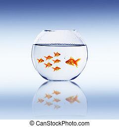 Goldfish swim in an aquarium with water.