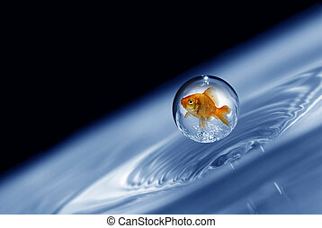 goldfish trapped in a droplet