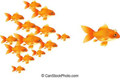 Goldfishes Follow Big Goldfish, Isolated On White