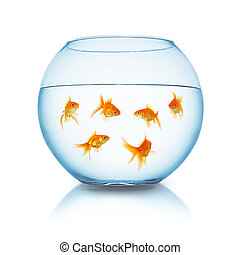 Goldfishes in a fishbowl
