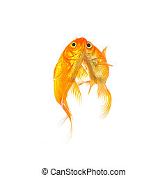 goldfishes in love with a kiss