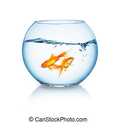 goldfishes swims in a fishbowl