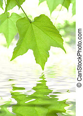 Goldgreen leaves reflecting in the water
