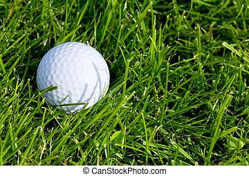 Golf Ball and Grass close up shot