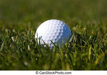 golf ball in first cut - golf ball in the first cut of rough...