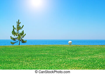 Golf ball near the tree on the background of the ocean. Portugal.