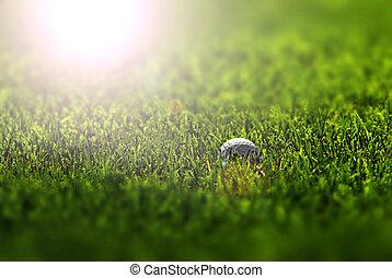 Golf Ball on Fairway in golden summer morning sunlight