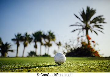 golf ball on green grass, palm trees background