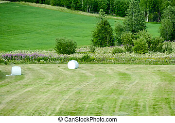 golf ball on the course, in Sweden Scandinavia North Europe
