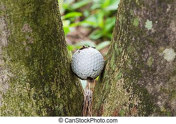 Golf ball stuck between two palm trees - Close up dirty golf...