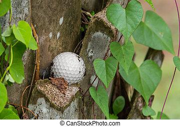 Golf ball stuck on palm tree - Close up dirty golf ball...