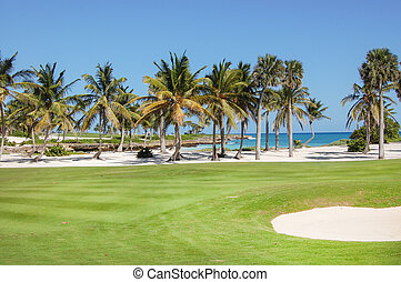 Golf club with palms in the garden