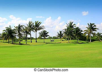 golf course tropical palm trees Mexico - golf course...