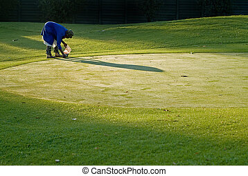 Golf green maintenance - Golf green keeper or maintenance...