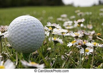 golf in daisy