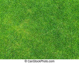 golf, textura, curso, fondo verde, pasto o césped