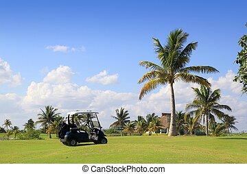golfe, méxico, árvores, tropicais, curso, palma